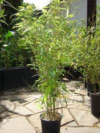 rhizomsperre bambus rhizomsperre f r bambus und wuchernde. Black Bedroom Furniture Sets. Home Design Ideas